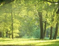 Value of the Local Environment For Health and Wellbeing – Planning Implications